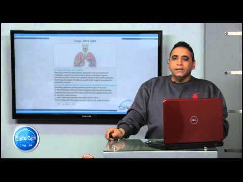 أحياء لغات - الباب الثالث| Respiratory System In Man