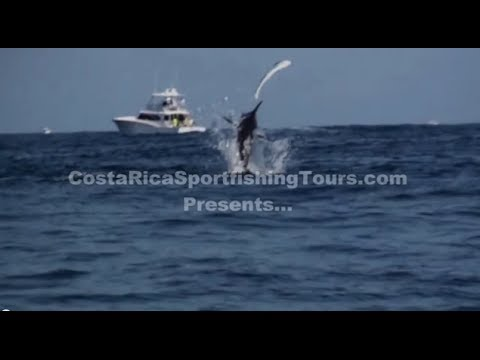 North Cal Sportfishing - This video was taken on a a Sport Fishing Tour out in Costa Rica . For more great videos or to take an unforgettable trip of your own contact us at http://ww...