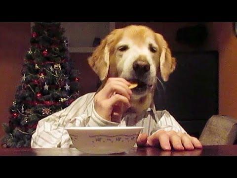 WATCH: Dog Problems Humans Just Don't Understand