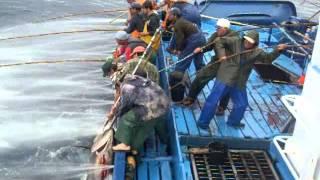 Mal Amanhado - Pesca Do Atum 2011