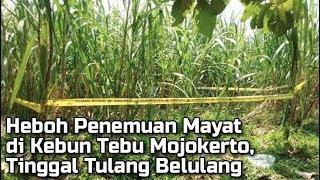 Video Heboh Penemuan Mayat Laki-Laki di Kebun Tebu Mojokerto, Kondisinya Sudah Tinggal Tulang Belulang MP3, 3GP, MP4, WEBM, AVI, FLV April 2019
