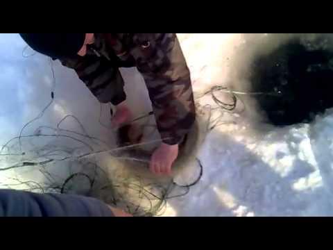 рыбалка браконьерство видео бесплатно