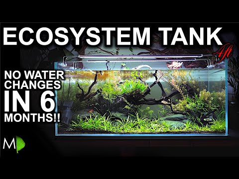 No Water Changes For 6 months!!! Ecosystem Aquarium: How It Happened & The Story So Far!