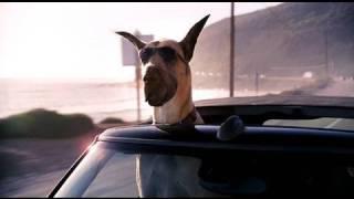 Nonton Marmaduke   Teaser Trailer  Hd    20th Century Fox Film Subtitle Indonesia Streaming Movie Download
