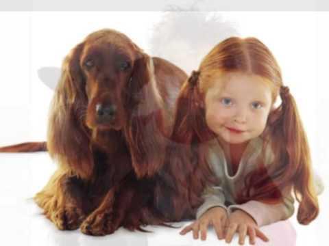 Mascotas que se parecen a sus dueños