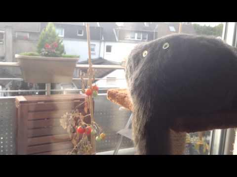 Lustiges Katzen Video Zum Totlachen/Lustiges Katzen Video