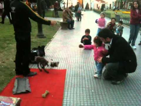 Street Dog Puppeteer