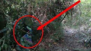 Download Video Seram !! Penampakan Sosok misterius terekam kamera Di Gunung palung kalimantan barat MP3 3GP MP4