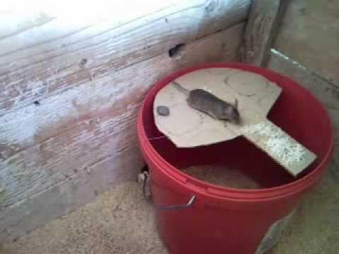 способ ловить мышей