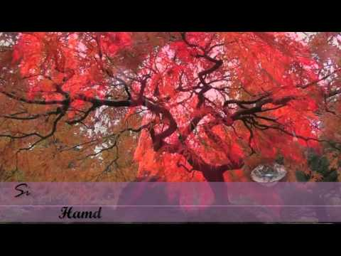 Video Hamda Noushad new Song download in MP3, 3GP, MP4, WEBM, AVI, FLV January 2017