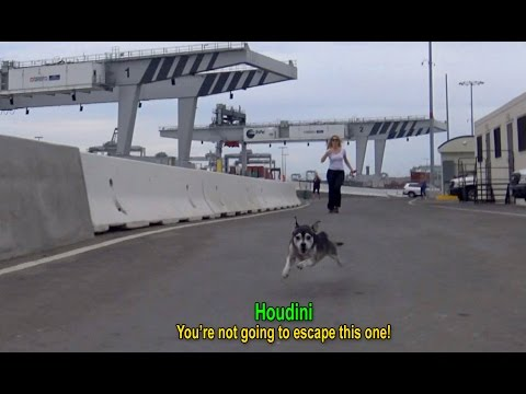 逃跑技術超高超的狗狗2年來都沒人能抓得到,直到最近成功網羅…牠的眼神讓志工都哭喊值得!