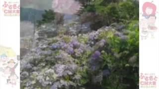 紫陽花の名所小坂公園