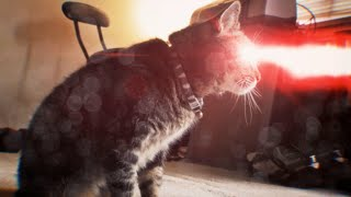 X-Men Origins: Cyclops Cat - YouTube