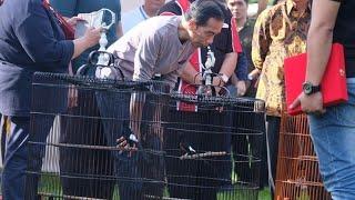Video Burung Milik Jokowi Kalah di Lomba Kicau Burung MP3, 3GP, MP4, WEBM, AVI, FLV Juni 2018