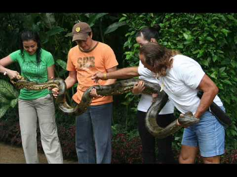 Leticia - Amazonas - Colombia - Rio Amazonas - Parque los Micos