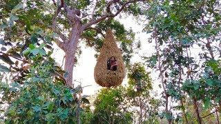 Video Building the beautiful big bird nest house on the tree MP3, 3GP, MP4, WEBM, AVI, FLV Juli 2019
