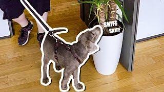 MEIN Hund erkundet das UFO...SITZT auf Rewis Tisch