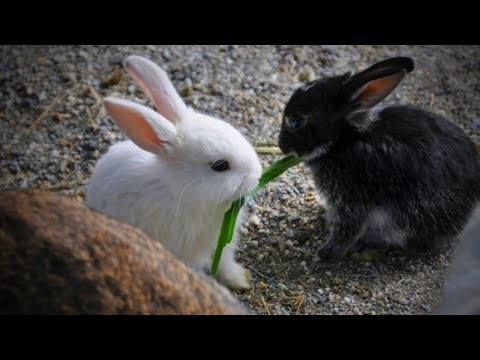 Animals Sharing Foods  Funny Animals Sharing Foods  [Funny Pets]
