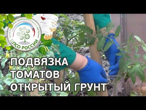 Как подвязать томаты в открытом грунте. Выращивание помидоров.