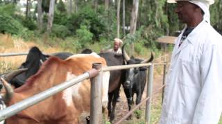USAID's Agricultural Growth Program-Livestock Market Development Project