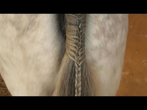 braiding horse hair instructions
