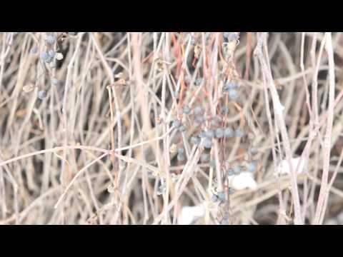 Sony A99 przykładowy film / sample movie