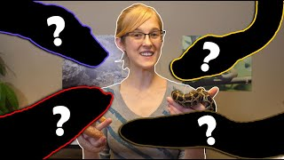 The Top 5 BEST Intermediate Snakes! by Snake Discovery