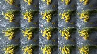 Video EmericvS: Flowers of Solitude