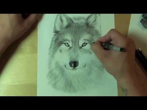 Wie zeichnet man einen WOLF ?! How to draw