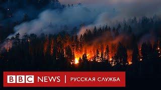 Авиалесоохрана объяснила причины лесных пожаров в Сибири