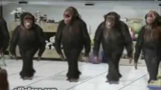 ריקוד תימני גזעי
