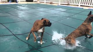 Video SLIP 'N SLIDE BOXERS ON POOL COVER!! (Brock the Boxer Dog) MP3, 3GP, MP4, WEBM, AVI, FLV Mei 2017