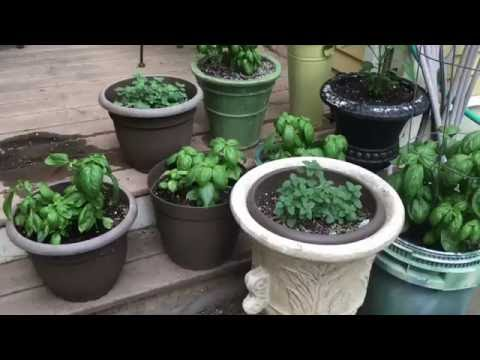 , title : 'How to plant a patio container garden - Bistro deck plants'