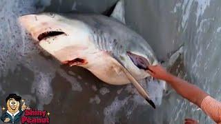 Video Isi Dalam Perut Ikan Hiu Ini Membuat Semua Orang Terharu Dan Sedih MP3, 3GP, MP4, WEBM, AVI, FLV Oktober 2018