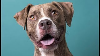 LIVE: Adoptable Dog in New York City - TIBBLE | The Dodo LIVE by The Dodo