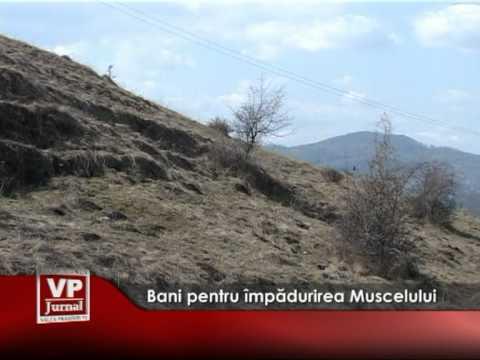Bani pentru împădurirea Muscelului
