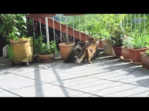 Boy Katzennetze - Balkonsicherung mit Teleskopstangen und Katzennetz