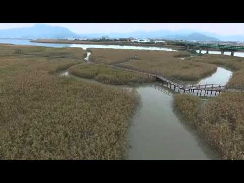 드론으로 보는 강진 갈대밭(강진 생태탐방로)