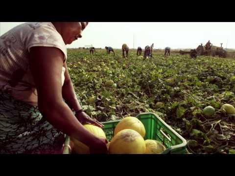 Angola cresce mais em todos os caminhos