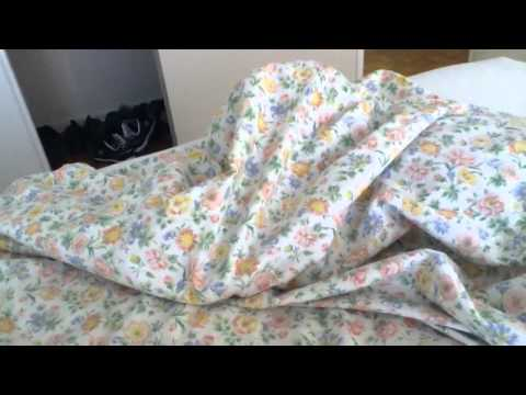 My bed is a mystery…WITH CATS!!!