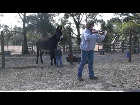 Duet With A Donkey