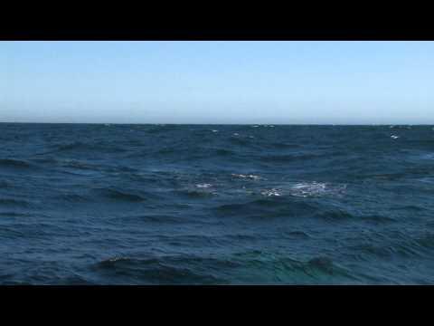 「神秘的...クジラの潮吹きに虹がかかる様子を撮影した動画。」のイメージ
