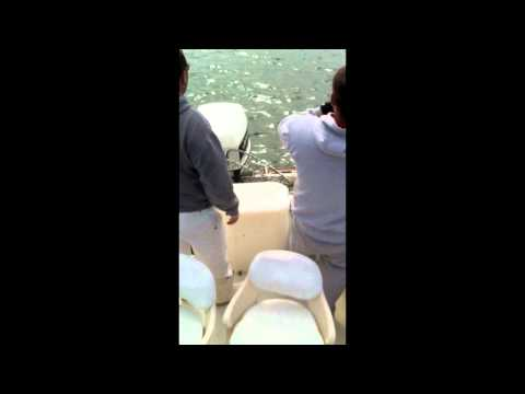 Light Tackle Spring Striped Bass Fishing