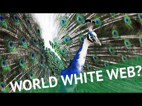 Digitaler Salon: World White Web?