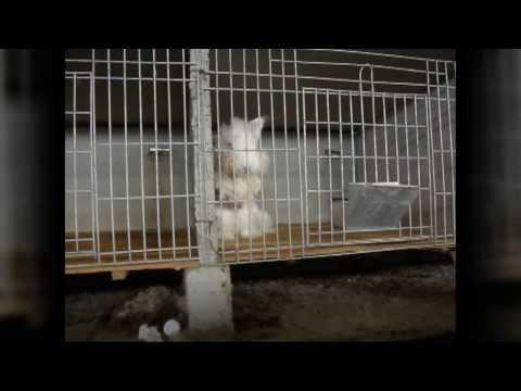 兔子被拔毛的慘痛過程!很可惡…