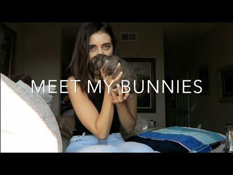 Meet My Bunnies