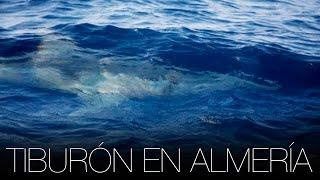 Almeria - Costa De Almeri Spain  city photos : Tiburón blanco en Andalucía - Cabo de Gata (Almería) | Tiburones en España