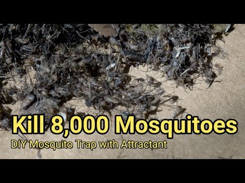 How to Make an Effective Mosquito Trap