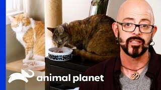 Good Kitty Needs To Learn To Stand Up To Her Bullies | My Cat From Hell by Animal Planet