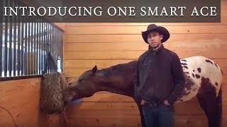 One Minute with One Smart Ace: Introducing One Smart Ace